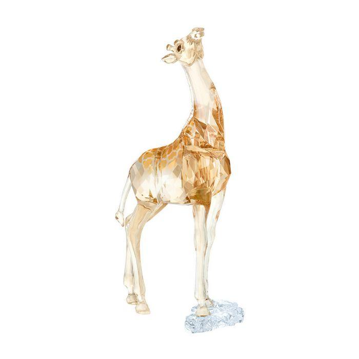 SCS Baby Giraffa